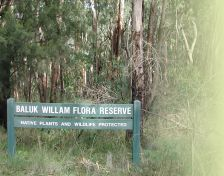 Baluk Willam Flora Reserve - Native Plants and Wildlife Protected